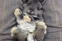 Futures bunnies ( current bunny lady)