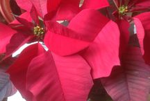 Christmas Season!!!!!!!!!! / All about Christmas!