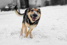 Dogs / Animal dog snow winter