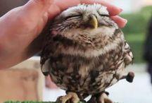Owls | Eulen