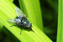 Trappole x insetti mosche e altro