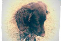 Mijn pup Tinus