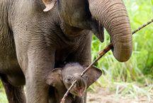 Olifant met baby olifant
