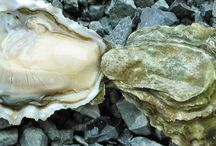 Shellfish, Mollusks, Crustaceans / 0