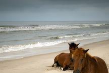 Horses-beautiful creatures
