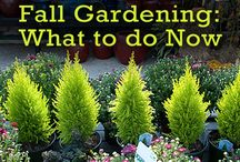 Gardening projects to do