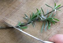 Plant tips / by Jayne Smith