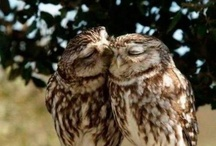 Owls / by Mary Eads