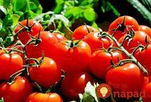 pěstovaní zeleniny