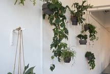 Plantenmuur