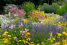 """Get inspired- Colorado gardens in bloom / What do Colorado gardens look like? What does """"xeriscaping"""" look like, and is it all rocks? Nope! Check out some fab local gardens and soak up some inspiration."""
