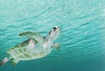 Turtles ⚓️