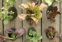 Gardening/outdoor