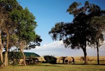 Things to do in... Kenya