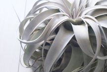 bromeliads and air plants