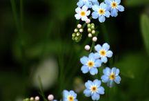 Shade garden / Perrenials & annuals for the shaded garden