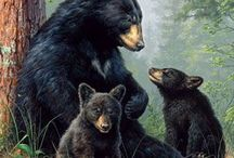 Bears. / There are eight bear species and some of these species have many sub-species.