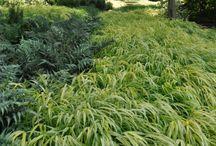 Gräs i trädgården