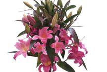 Boutique fleuriste Valbonne Sophia Antipolis / Bouquets disponibles sur notre boutique en ligne
