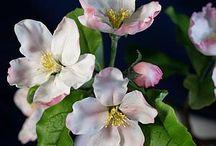 kvetoucí jabloně...