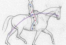 Horse Riding & Training