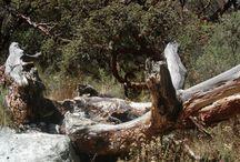 Naturaleza / Paisajes y naturalezas encontradas.