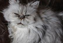 Cat / Chat dans tout ses états...
