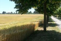Abruzzo Italy  / La mia terra