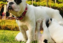 Dogs:) / Cute dogs