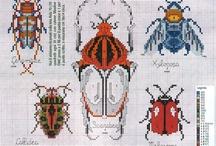 Borduren insecten