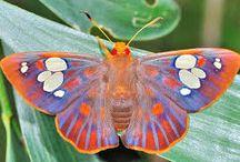 mothsandbutterflies