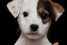 Mascotas / Amigos que me gustaría tener