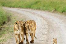 Wildlife <3