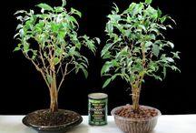 Plant :)