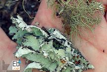 Nature Study | Lichens