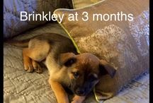 Pets / My family, recently joined by our puppy Brinkley so she will probably feature a lot