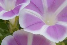 Flores,  preciosas flores! / by MaPi De Llata