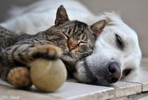 Cats and friends