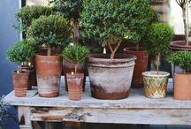 Krukor & trädgård