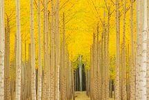 Beautiful world / by Jennifer Magliocco