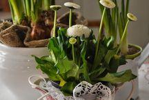 Springtime and flowerarrangements / Springflowers