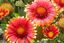 Fabulous Florals / by Laryn Henson