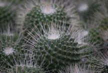 Cactus inspiratie