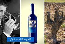 #Obergo Diccionario del #Vino / Te mostramos de una forma muy amena un Índice Terminológico del #Vino a través de un recorrido diferente: el de #BodegasObergo