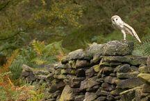 Wild nature / animals, birds, wild nature