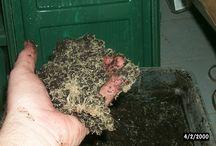 White worms