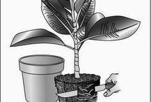 repot in plants