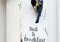 Bed And Breakfast / nature, garden, birds