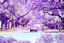 Pretoria Beautiful