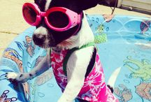 Pamper Your Pooch Photo Contest
